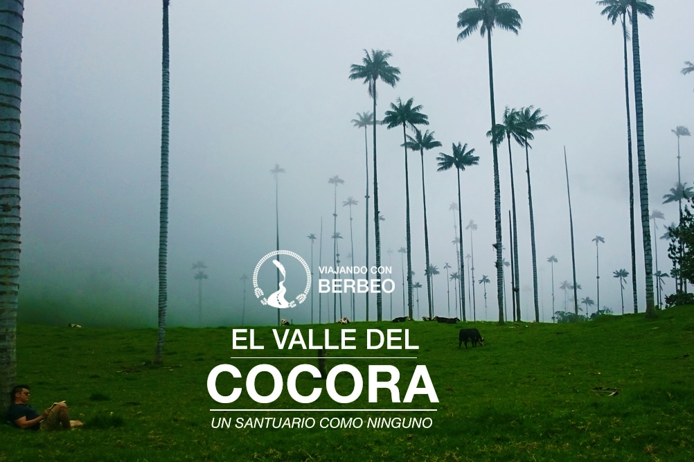 Header cocora valley